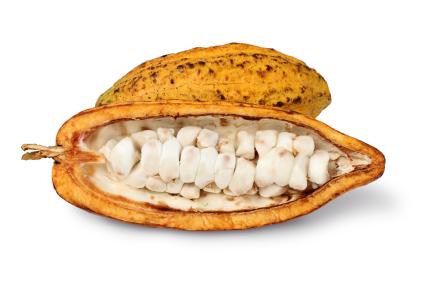 cocoapod.jpg